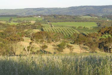 #120 McLaren Vale- Wine Country