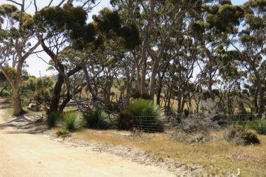 #170 Kangaroo Island