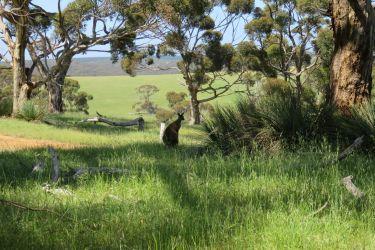 #169 Kangaroo Island