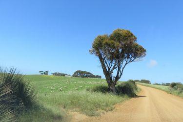 #166 Rural Vista