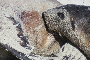 #163 Kangaroo Island- Seal Bay Conservation Park