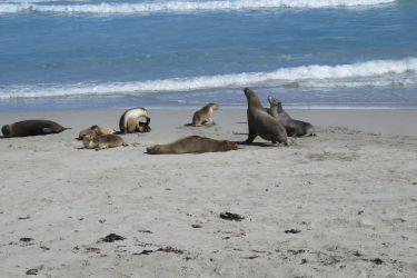 #162 Rare Seals