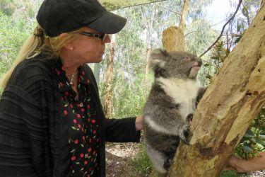 #186 Koala Experience