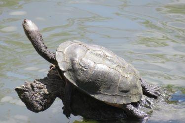 #190 Adelaide Zoo