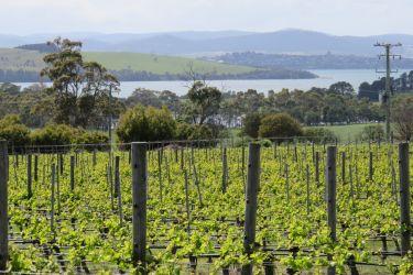 #55 Frogmore Vineyards
