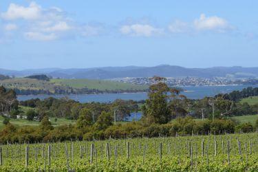 #53 Frogmore Creek's Vineyards