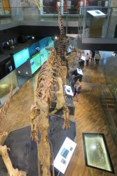 #72 Melbourne Museum Exhibitions