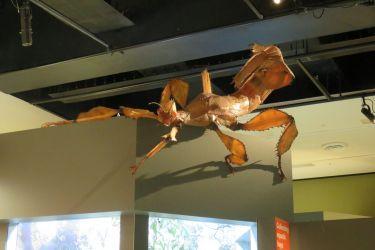 #71 Melbourne Museum