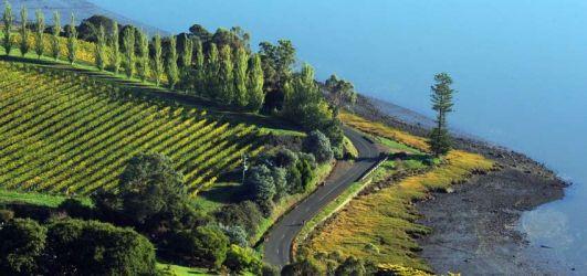 #49 Next stop- Tasmanian Wine Country