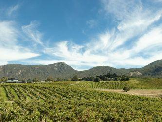 #119 South Australia Wine Country