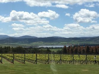 #54 Vineyard View from Frogmore Creek Winery